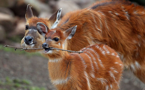 animales adorables (1)