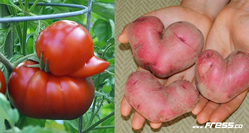 27 Vegetables with identity problems